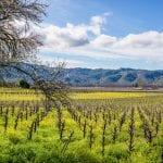 Old River Road Vineyard Estate For Sale